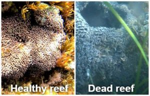 SEEP: Coral reefs research in Vlora Bay in Albania